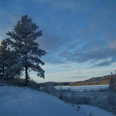Vinter nr 3